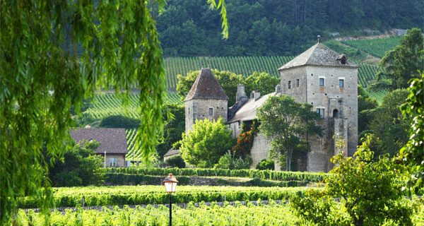 Виноградник в Шампани
