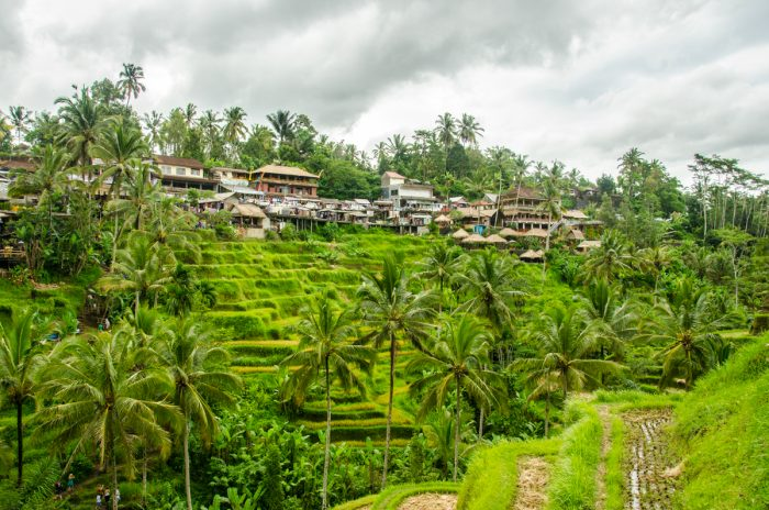 Рисовые террасы Тегаллаланг, Бали